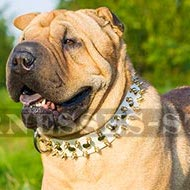 Dog Collar for Shar-Pei of White Leather with Spikes and Studs