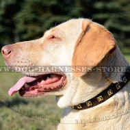 "Dog Collar with Studs of Square Shape, 1"" Wide for Labs"