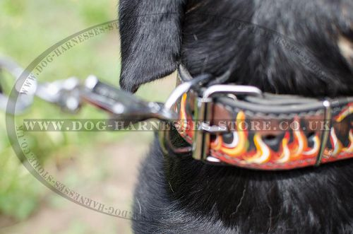 Unique Dog Collar