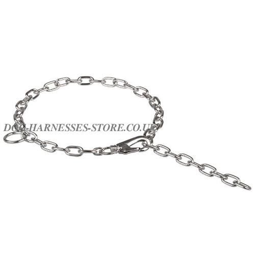 Check Chain Dog Collar