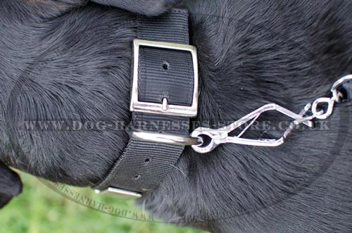 Dog Collars with Buckle for Swiss Mountain Dog