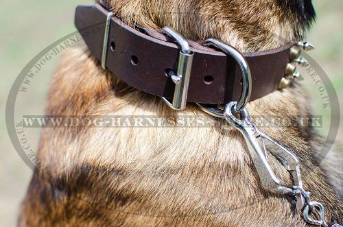 Buckle Dog Collar