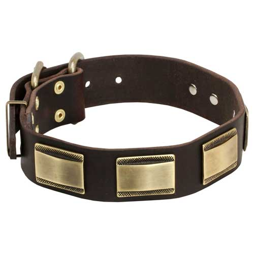 Decorative Dog Collar UK