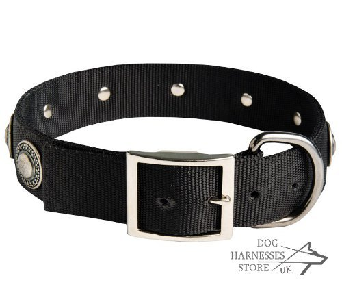 Nylon Dog Collars UK