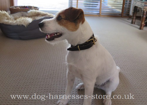 Small Dog Collar for Little Dog Breeds
