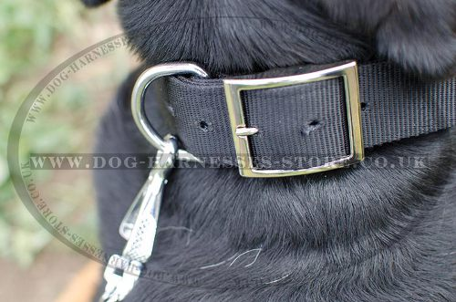 Dog Collar with Name Plate