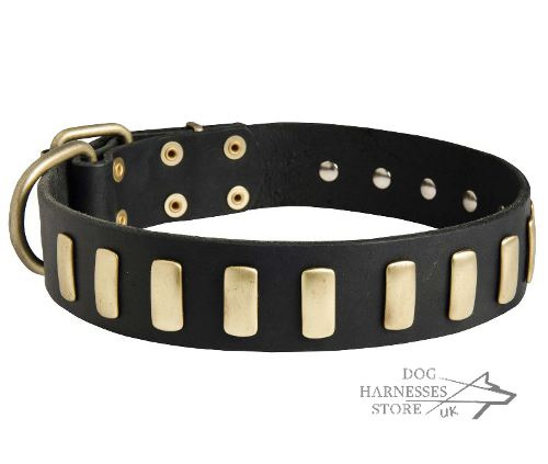 Trendy Dog Collar