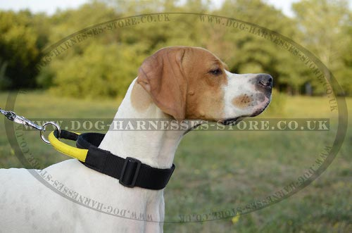 English Pointer Dog Collars
