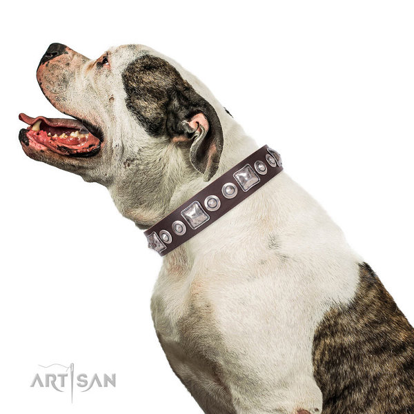 American Bulldog Collars for Sale