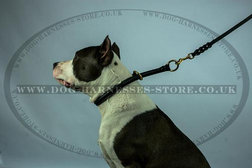 Leather Choke Dog Collar