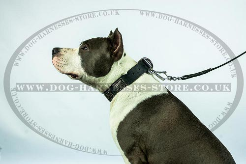 Amstaff Collar UK Ancient Style