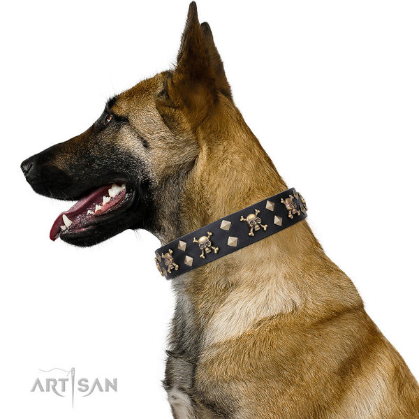 Belgian Malinois Dog Collar