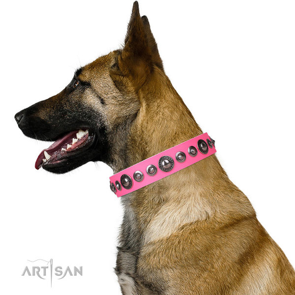 Belgian Malinois Dog Collars