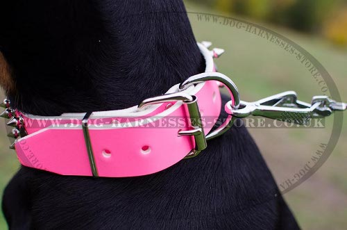 Best Doberman Dog Collars