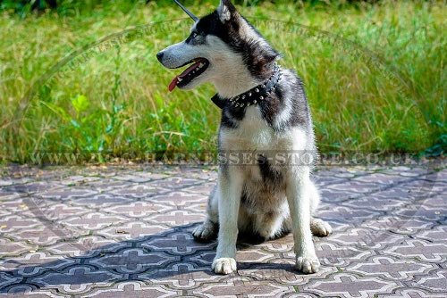 Best Dog Collar Husky