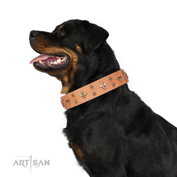 Best Dog Collar Rottweiler