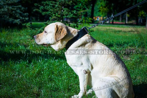 Best Dog Collars for Labs