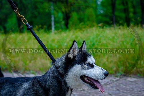 Best Training Collar for a Husky