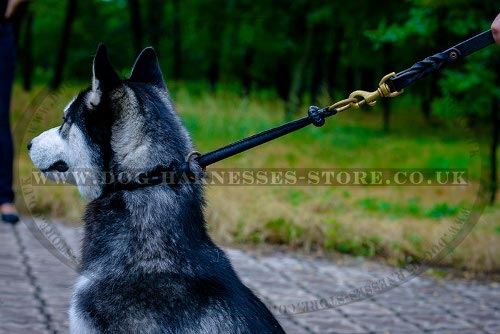 Best Training Collar for Husky