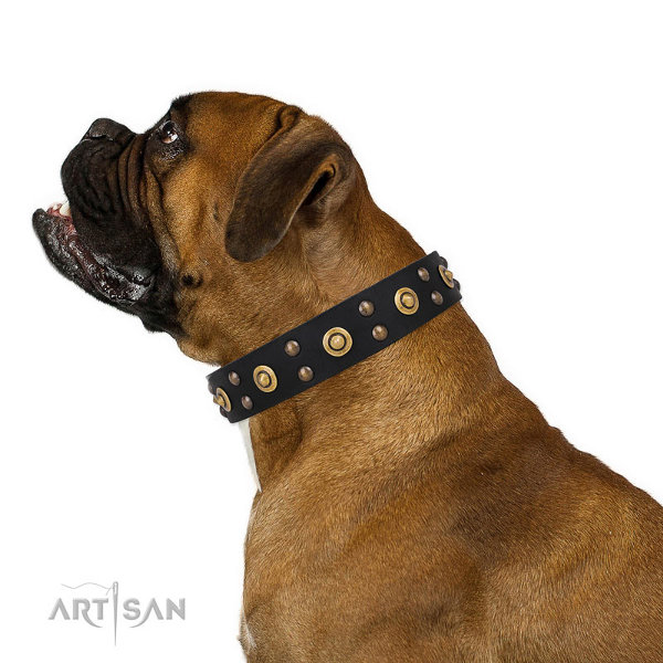 Boxer Dog Collars UK