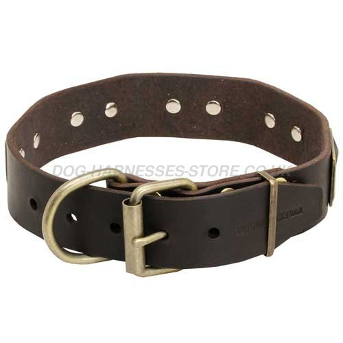 Brass Plated Leather Dog Collar