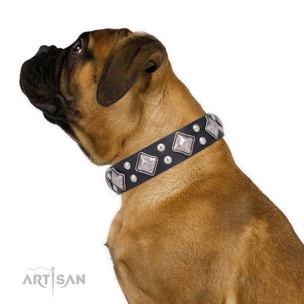 Bullmastiff Dog Collars UK