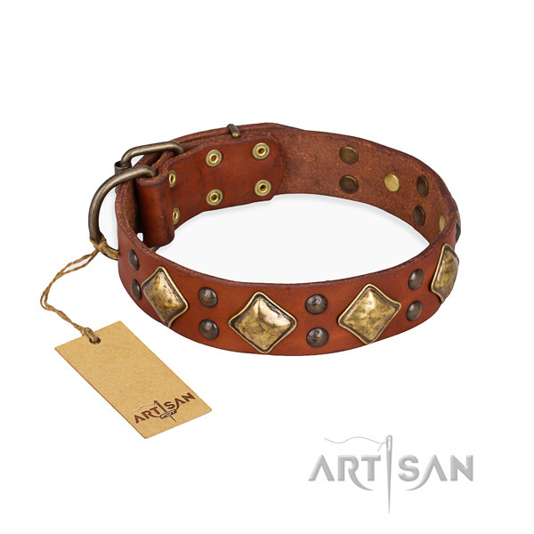 Buy Dog Collars UK