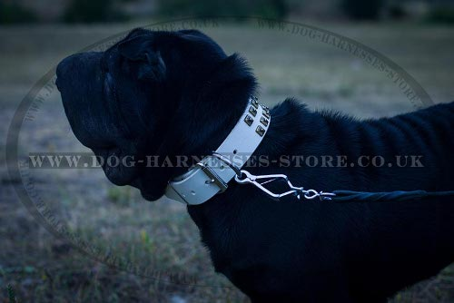 Collar for Shar-Pei