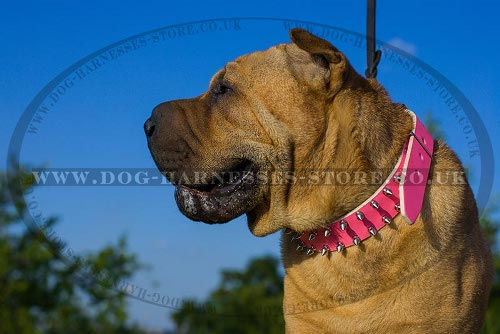 Collars for Shar-Pei Dogs