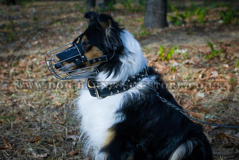 Collie Muzzle. Wire Basket Dog ...