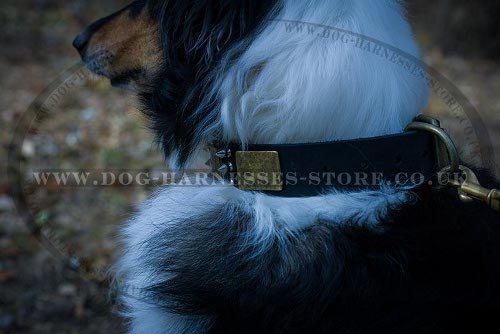Collie Collar UK