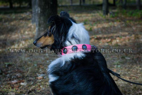 Collie Collars UK