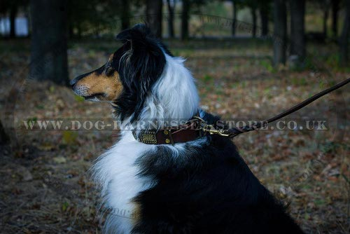 Collie Dog Collars