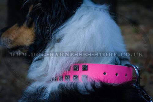 Collie Dog Collar UK