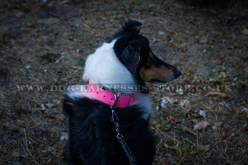 Collie Dog Collars UK