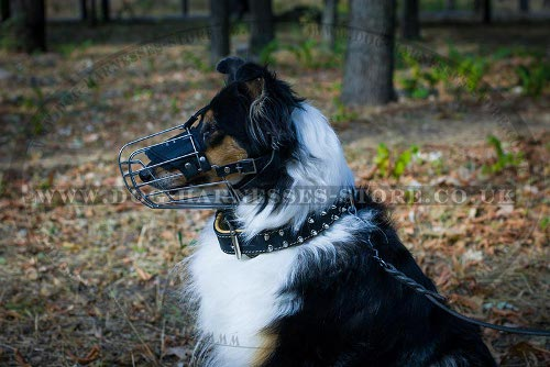 Collie Collars
