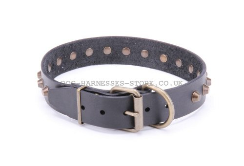 Cool Collar for Dogs