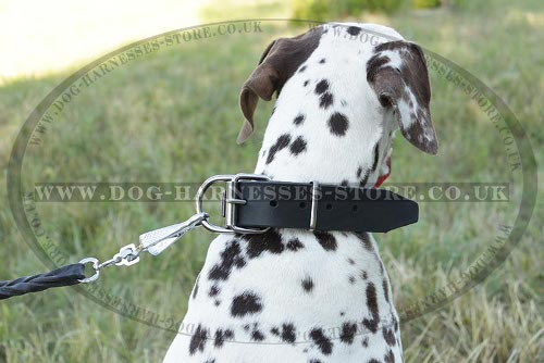 Dog Collars for Dalmatian