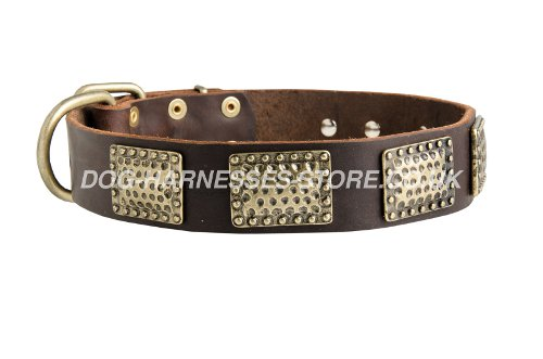 Decorated Leather Dog Collars