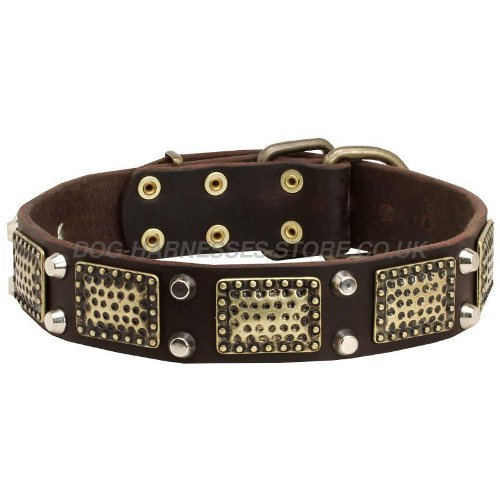 Dog Collar for Shar-Pei
