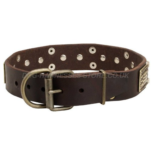 Decorative Leather Dog Collars