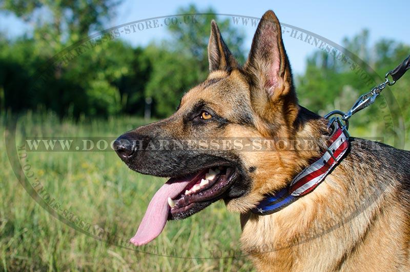 Designer Dog Collar For Gsd Style  U2605