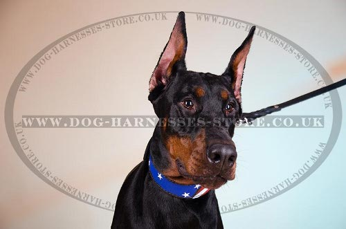 Doberman Leather Dog Collars