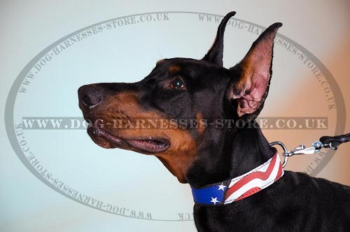 Doberman Pinscher Leather Collars