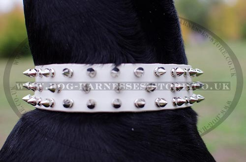 Doberman Pinscher Spiked Collars