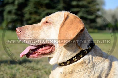Dog Collars for Labs