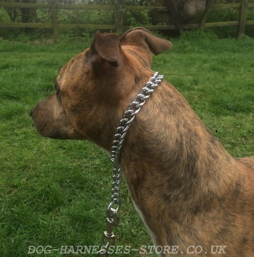Dog Choke Chain Collar