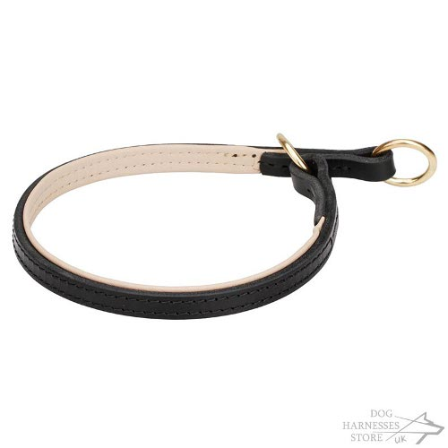 Dog Choke Collar Safe