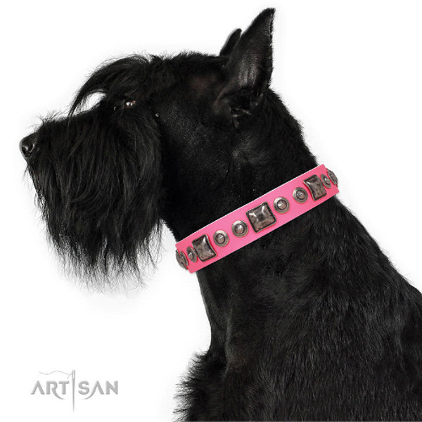 Dog Collar for Riesenschnauzer