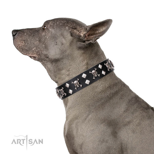 Dog Collar for Thai Ridgeback